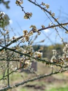 Puutarhan hoito toukokuussa - video