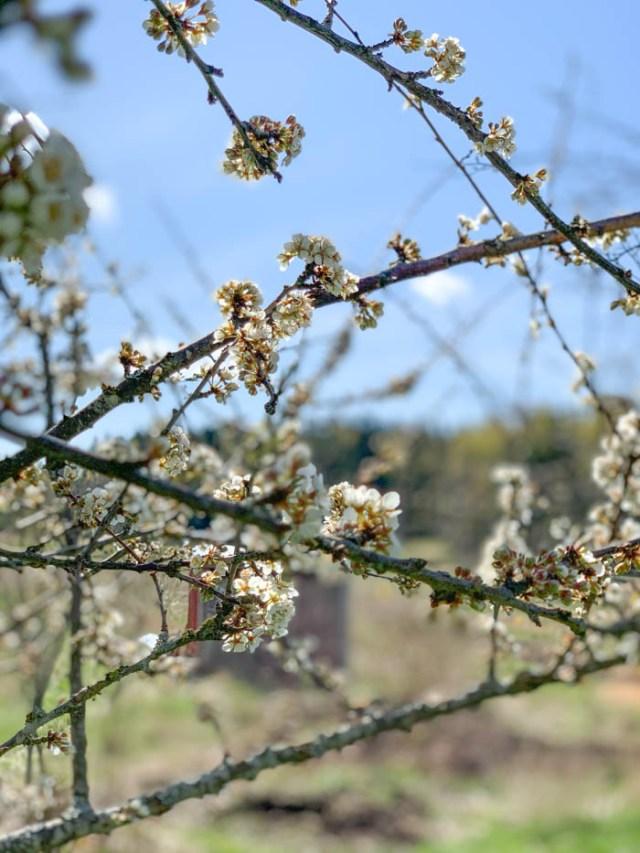 Puutarhan hoito toukokuussa
