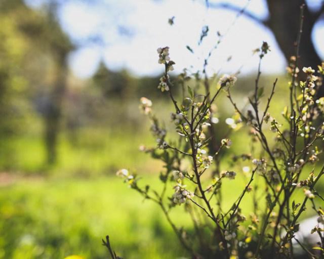 Puutarha - satoa jo alkukesästä