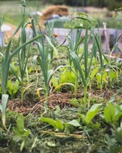 Puutarha ja kasvimaa