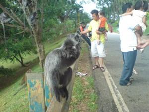 penduduk tetap Bukit Malawati
