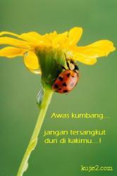 kumbang dan bunga