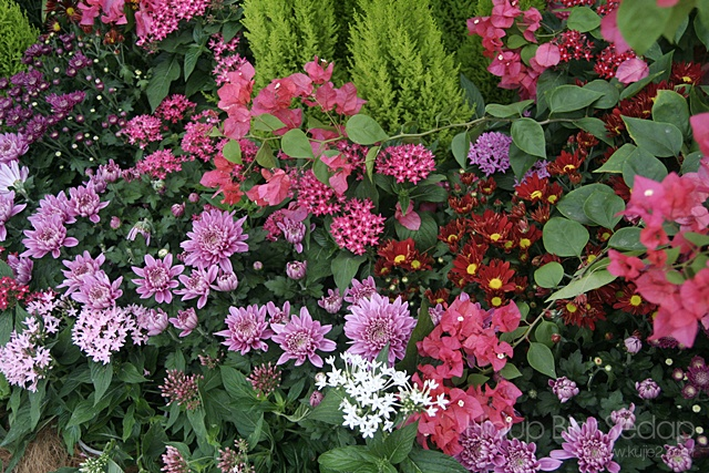 gambar bunga pesta flora 2012