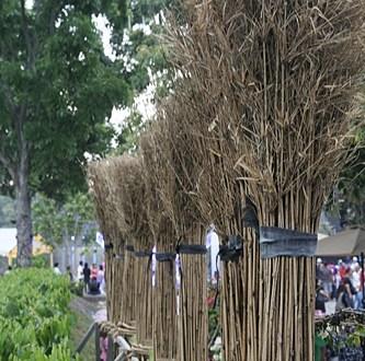 Gambar Pesta Flora Putrajaya 2012