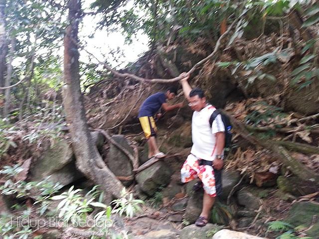 laluan dicelah akar kayu