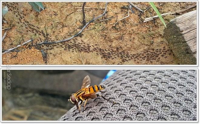 serangga di dalam hutan