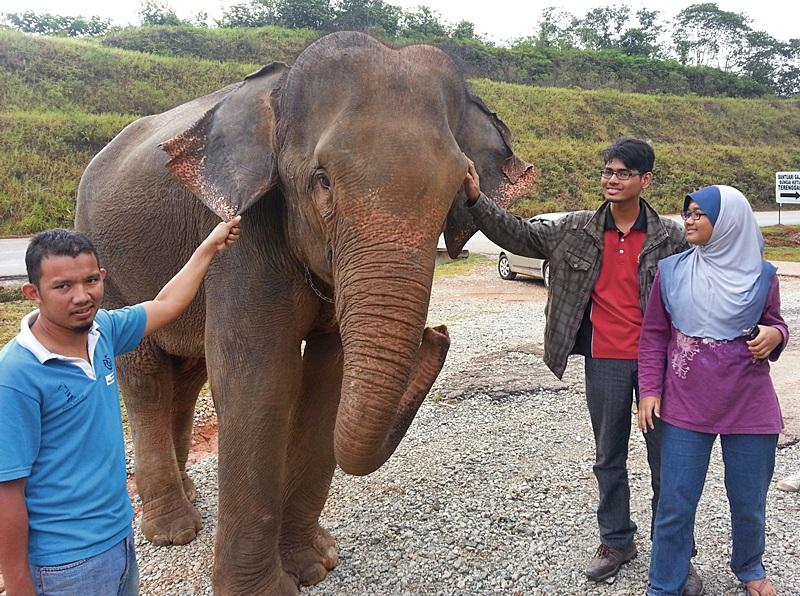 gajah malaysia