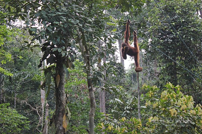 Semenggoh Wildlife Centre Kuching