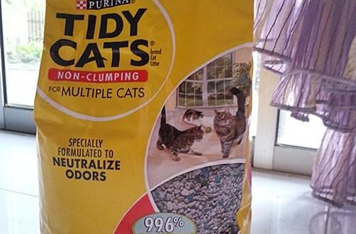 Pasir Kucing Terbaik Dan Murah
