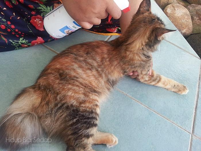 spray-ubat-kutu-kucing