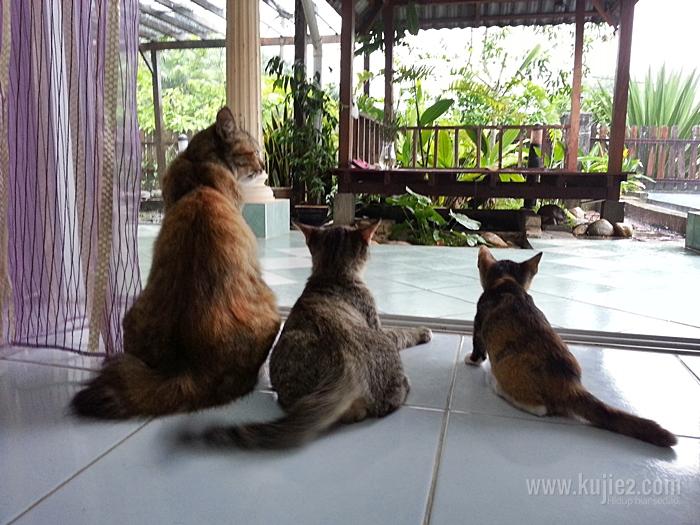 kucing comel