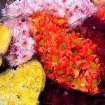 flores-ramos-florales-gerberas-margaritas