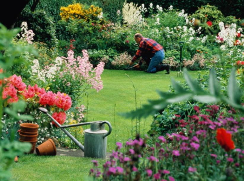 Kukyflor| Cómo plantar flores en tu jardín