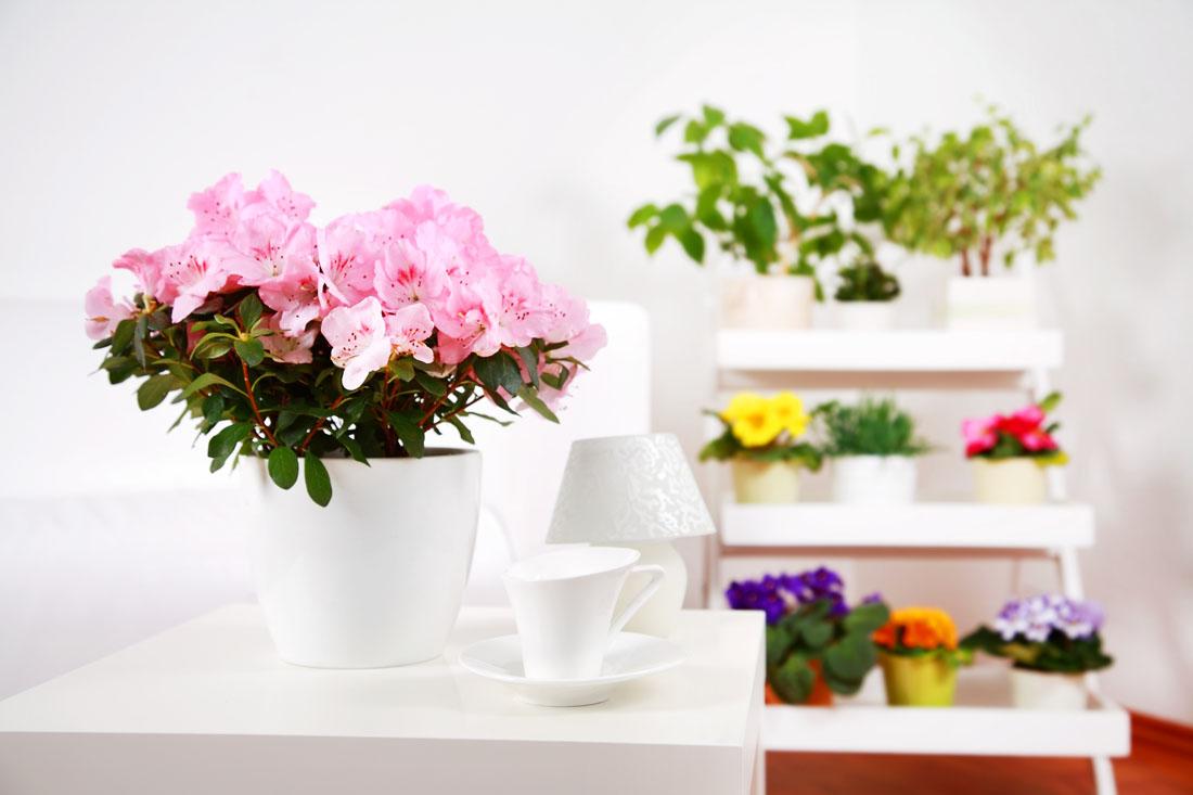 Kukyflor 4 formas de decorar tu casa con flores for Formas para decorar una casa