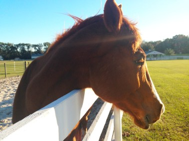 florida-christian-retreat-and-conference-center-equestrian-room-5-sm