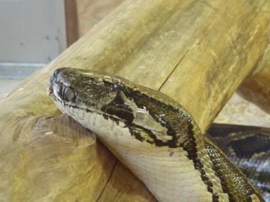 kulaqua retreat conference center zoo nature center images snake delilah florida's best christian retreat location kulaqua