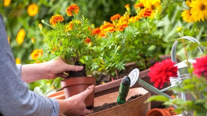 Süs Bitkisi Yetiştirerek Para Kazanmak
