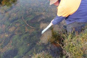 Imupumpulla saa näytteitä noin puolen metrin syvyydeltä kastelematta itseään.