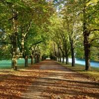 Köln - Herbst am Decksteiner Weiher