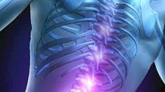 Omurilik Fonksiyonu ve Anatomisi