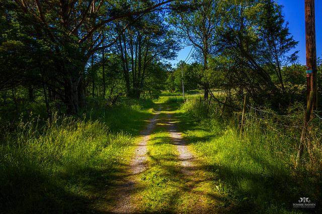 skogsväg 3