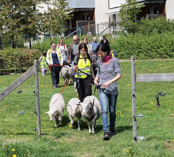 Fårvandringen 2012-05-19