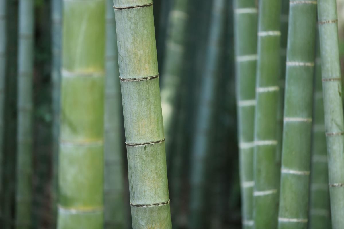 3 Gode Grunde Til At Vaelge Bambus Sengetoj Kulturnet Dk