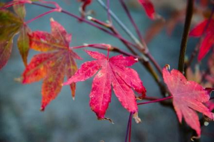 Die letzten Herbstboten
