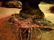 Palma Aquarium (4)
