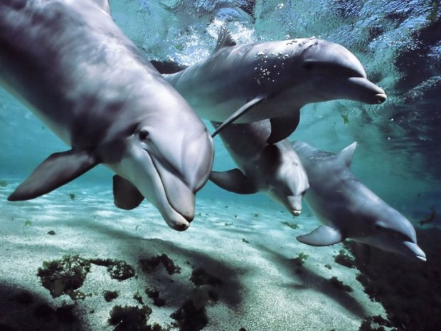 Dolphins-talk-language