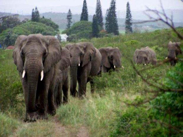 Elephant_Whisperer_5