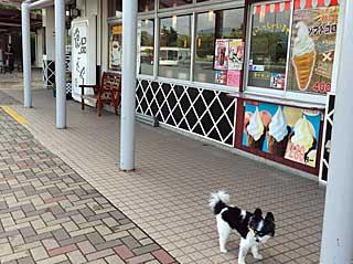 福島旅行…若冲にあいにいきました 3