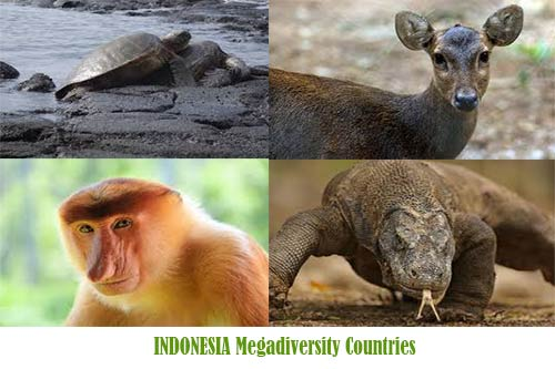 Fauna Indonesia Megadiversity Countries