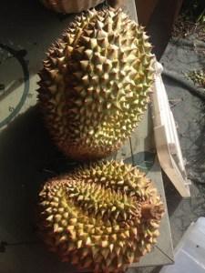 Durian2_lr
