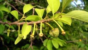 smallfruits_lr
