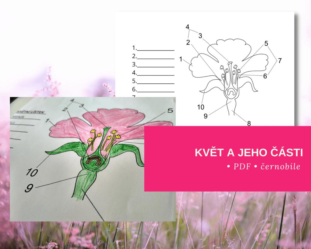 pracovní list popis květu