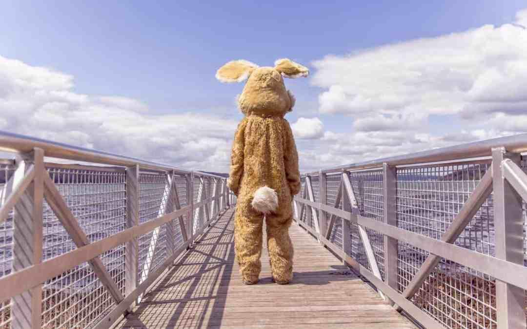 Selbsttest: Die Kaninchen-Illusion – kundenorientierung.coach