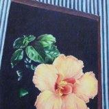 Hibiskus flower and stripes I, Farbstift auf Papier 50x60cm