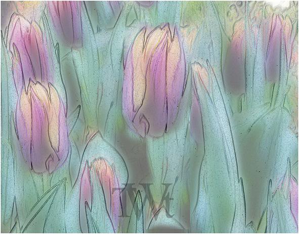 Thomas Went - Tulpen 01 (2020) DigitArt-Bild