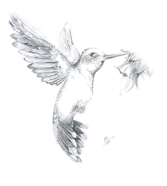 Kolibri Vogel Kolibri Zeichnungen Wandmalerei Von