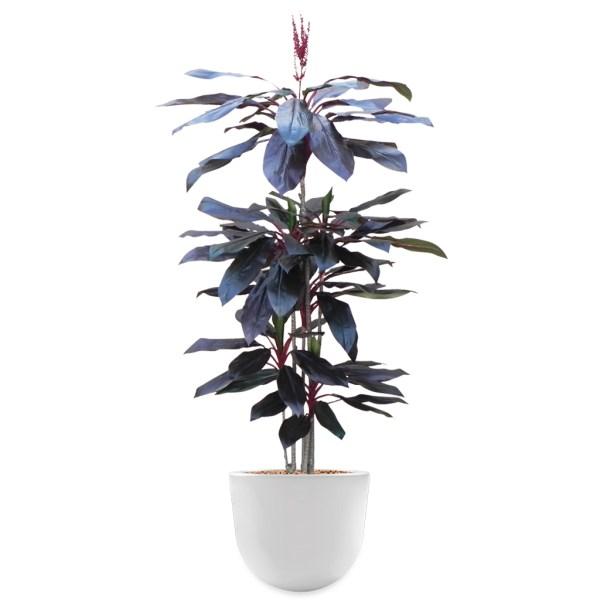 HTT - Kunstplant Cordyline rood in Eggy wit H195 cm