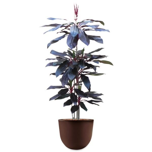 HTT - Kunstplant Cordyline rood in Eggy bruin H195 cm - kunstplantshop.nl