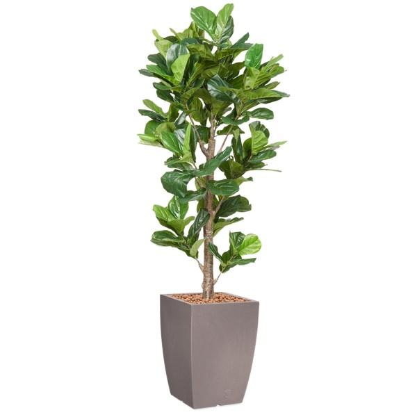 HTT - Kunstplant Ficus Lyrata in Genesis vierkant taupe H230 cm - kunstplantshop.nl