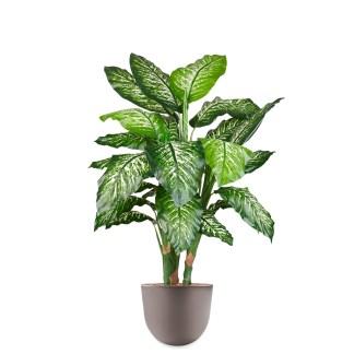 HTT - Kunstplant Dieffenbachia in Eggy taupe H130 cm - kunstplantshop.nl