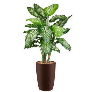 HTT - Kunstplant Dieffenbachia in Genesis rond bruin H150 cm - kunstplantshop.nl