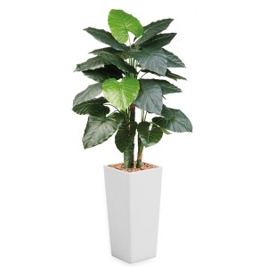 HTT - Kunstplant Philodendron in Clou vierkant wit H185 cm - kunstplantshop.nl
