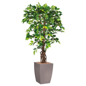 HTT - Kunstplant Ficus in Genesis vierkant taupe H165 cm - kunstplantshop.nl