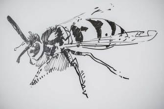 Eine Biene im Sommerkurs