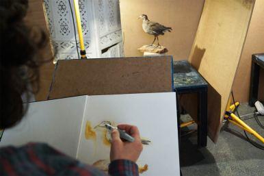 Farbige Zeichnung eines ausgestopften Vogels (Taube), Hand, die einen Pinselstift hält.