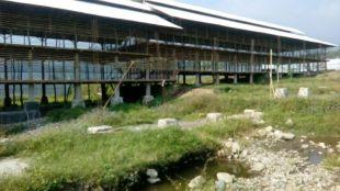 Peternakan ayam yang dikeluhkan warga Sukaharja, Cijeruk karena mengeluarkan bau tidak sedap dan mengganggu kenyamanan warga (dok. KM)